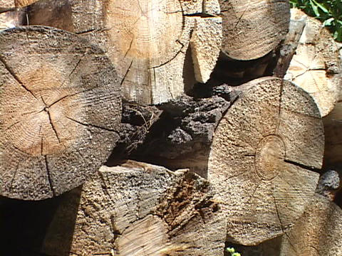 Logs rest on top of one another in a woodpile Footage