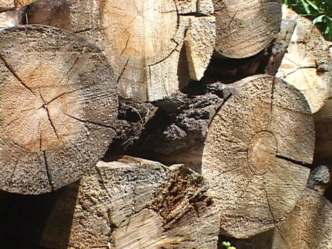 Logs rest on top of one another in a woodpile Stock Video Footage