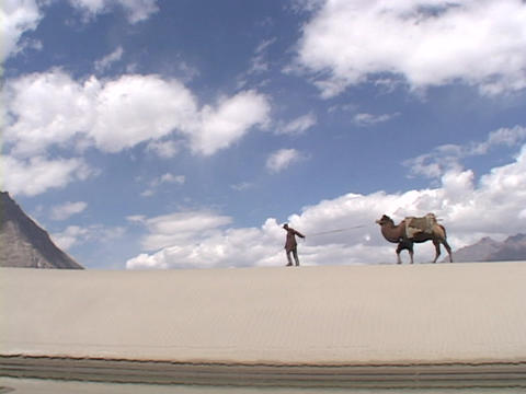 A man leads a camel across a sand dune Footage