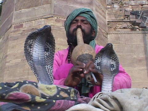 A snake charmer plays music for two cobra snakes in India Stock Video Footage