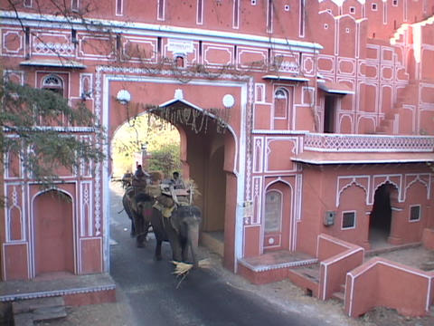Elephants walk through the gates of Jaipur, India Footage