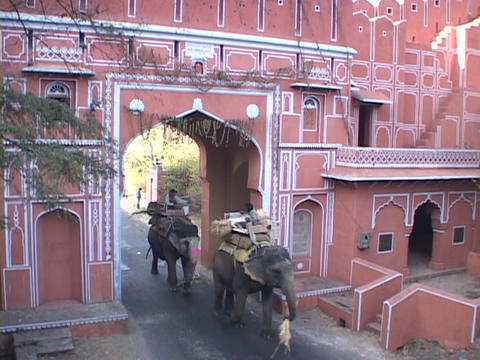 Elephants walk through the gates of Jaipur, India Stock Video Footage