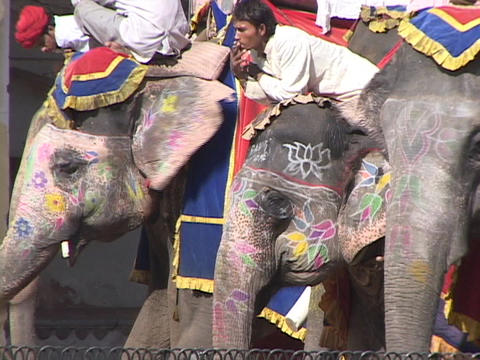 Riders relax atop painted elephants in India Stock Video Footage