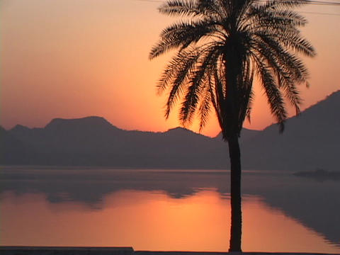 A palm tree in silhouette stands before a beautiful lake Stock Video Footage