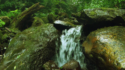 Water stream in mountain forest (live camera) GIF