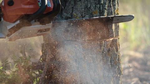 Man with orange chainsaw cutting dry tree Footage