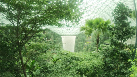 Indoor filled with greenery at Singapore Changi Airport Live Action