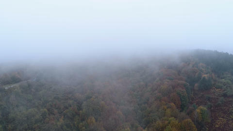 Aerial drone view of mist going above tree tops in the fall. Autumn forest with Archivo