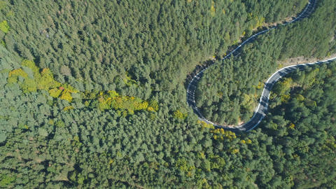 Top view of car driving on curly, winding forest road in evergreen forest in Footage