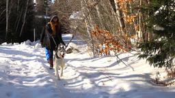 Two women walking husky dog in winter Footage