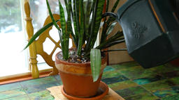 Watering the plants indoors in winter Live Action