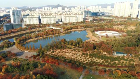 Korea downtown autumn maple leaf Ansan Lake Park 02 Live Action