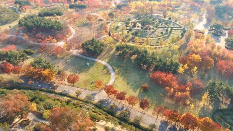 Korea downtown autumn maple leaf Ansan Lake Park 06 Live Action