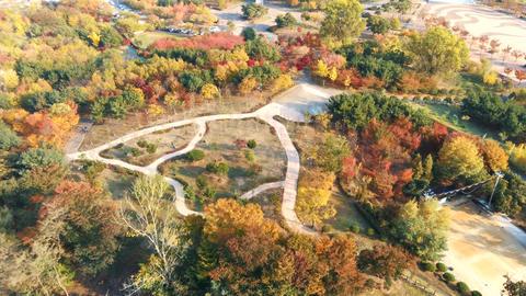 Korea downtown autumn maple leaf Ansan Lake Park 07 Live Action
