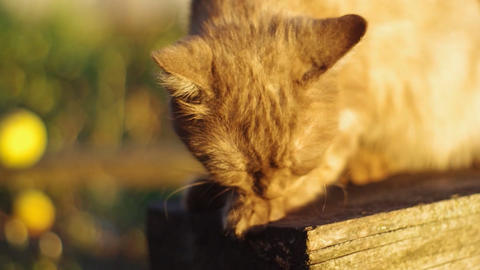 cat washes in the sun Footage