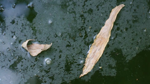 dry leaves floating on water Footage