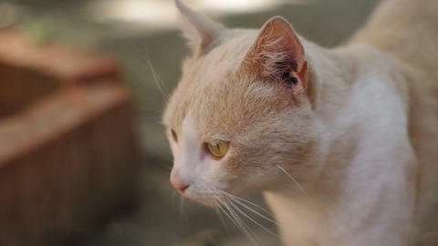 red cat with beautiful eyes Footage