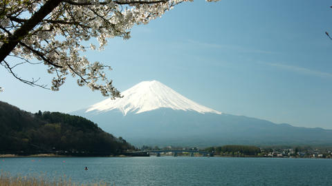 Sakura and Fuji mountain in Japan Footage