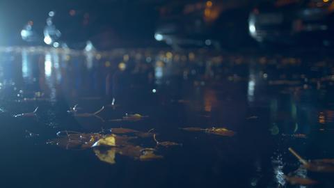 Autumn rain in the night city ライブ動画