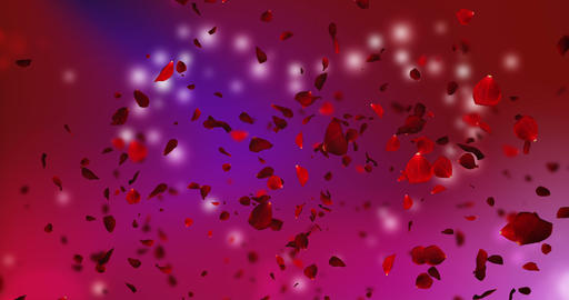 3d animation pink and violet rose petals flying with vortex on black background, love and valentine Footage