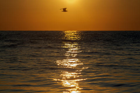 The golden path of sunrise in the sea Photo