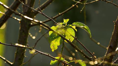 Autumn leaf with rain Live Action