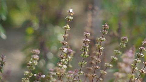 wild flowers in the field Footage