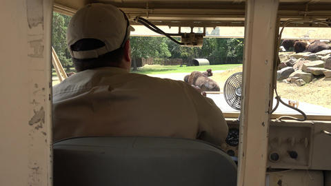 Driver of Safari Truck Live Action
