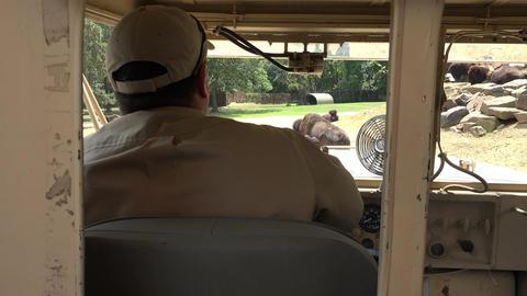 Driver of Safari Truck Footage