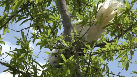 Wild Bird In Tree Footage