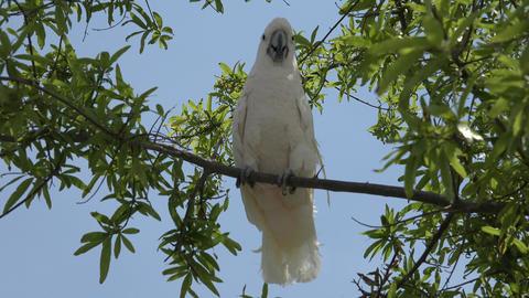 Wild Bird In Tree Stock Video Footage