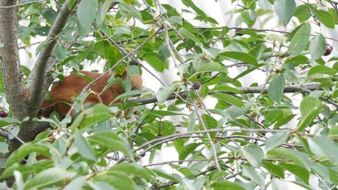 Squirrel Sitting On A Branch Footage