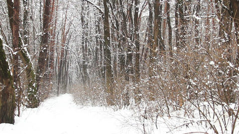 Snow falling on a path in winter park, slow motion Footage