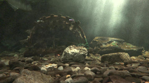 Ocean Floor or Seabed Footage