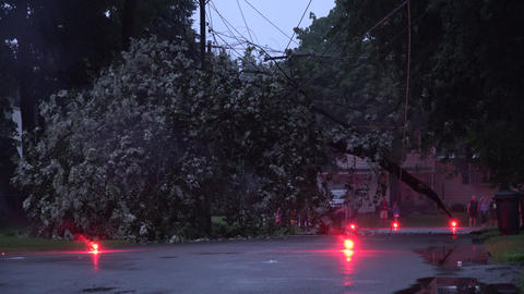 Fallen Tree from Storm Weather Footage