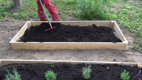 gardener in red raking black soil humus in new wooden raised bed for herbs and flowers Live Action