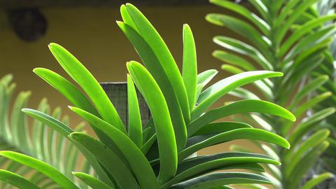 Outdoor Plants In Botanical Garden Live Action