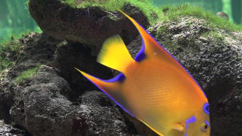 Coral and Fish in Aquarium Live Action