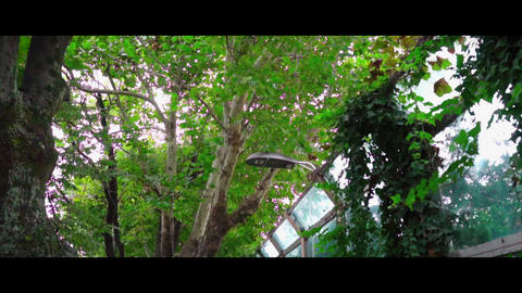 tree Live Action
