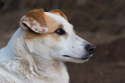 lonely stray dog portrait with sweet look Photo