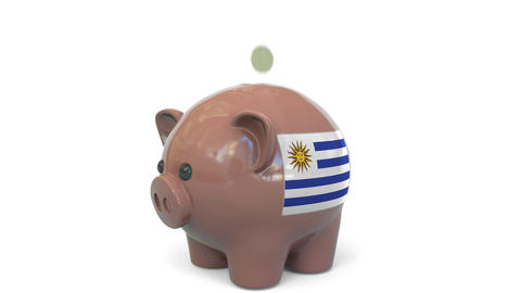 Putting money into piggy bank with flag of Uruguay. Tax system system or savings Live Action