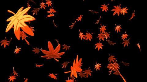 Loop able Fallen Leaves On Black Background CG動画