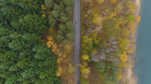 Cars driving at peaceful asphalt road in golden autumn…, Live Action