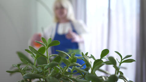 Blurred Caucasian woman spraying water on domestic plants at the background Live Action
