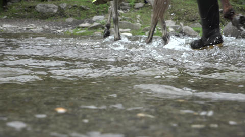 Horseback Riding Across River Footage