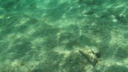 Fish Underwater Footage