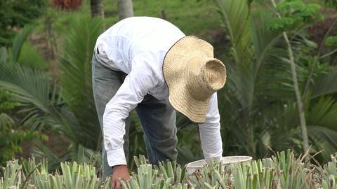 Farmer, Laborer, Worker Live Action