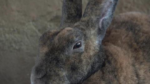 Rabbits, Bunny, Hare Footage