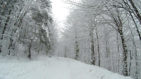 Empty snow covered road in the mountains during winter time with trees on the si Footage