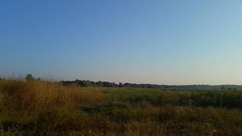 Wild steppe, burnt yellow grass Footage